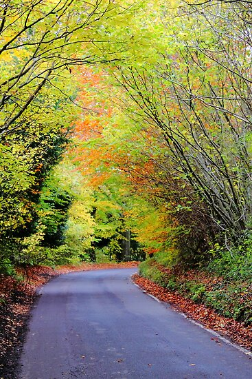 Autumnal impression by Stephen J  Dowdell