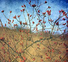 Rosehip by Angela Bruno