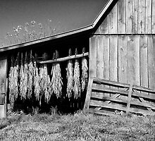 Tobacco Barn by Jane Best