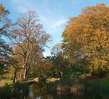 Autumn Landscape Bute Park Cardiff by Artberry