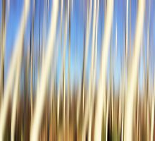 Birch Forest by Kimberley Bruce