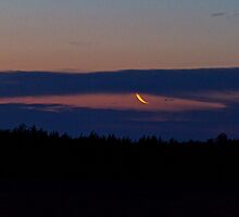Moon Light by tutulele