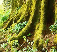 Mossy Tree Roots  by clydeypops