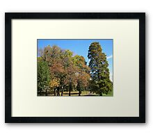Fall 2011, All Together Framed Print