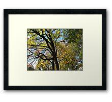 Fall 2011, Tree Trunk Framed Print
