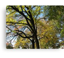 Fall 2011, Tree Trunk Canvas Print