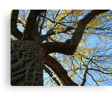 Fall 2011, Old  Canvas Print