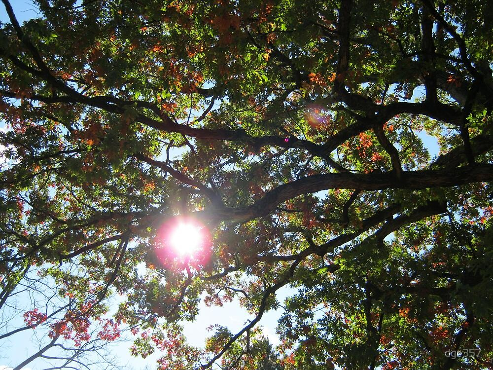 Fall 2011, Canopy 2 by dge357