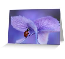 Ladybird  on purple hydrangea Greeting Card