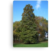 Fall 2011, To Tall 2 Canvas Print