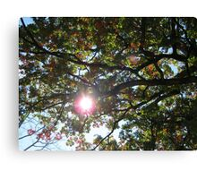 Fall 2011, Canopy Canvas Print