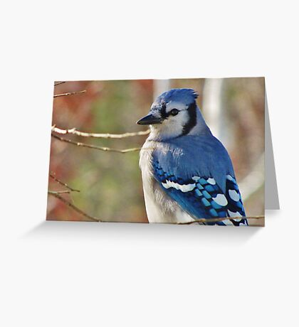 Blue Jay in Autumn Greeting Card
