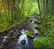 Herman Creek I by Tula Top