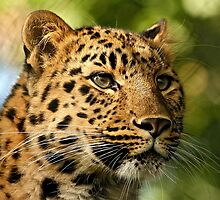 Feline Beauty by Mark Hughes