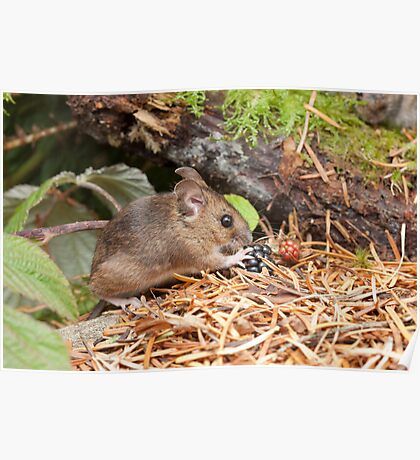 Woodmouse and Blackberries Poster