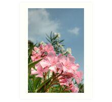 Pink Oleander Blossom, Riva Del Garda Art Print