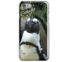 What's A Penguin To Do iPhone Case/Skin