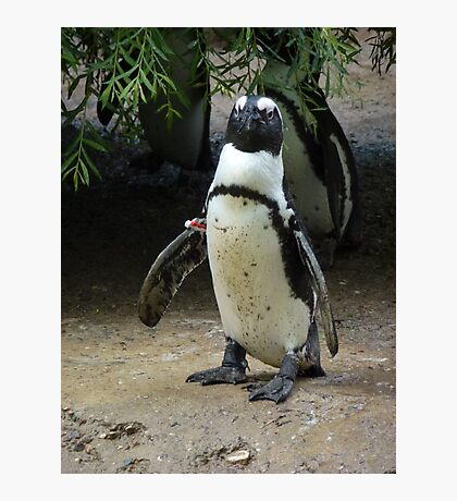 What's A Penguin To Do Photographic Print