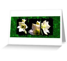 AMARILLYS AND GREEN  Greeting Card