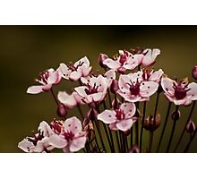 Tiny Pinks Photographic Print