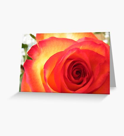 Red and Yellow Rose Greeting Card