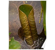 Veined Rolled Lily Pad Poster