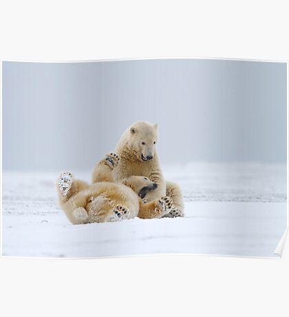 Playtime For Polar Bears Poster