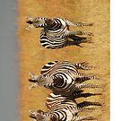 Masai Mara Zebra iPhone cover by Brad Francis