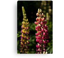 Pink Lupins Canvas Print