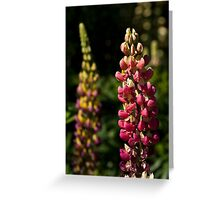 Pink Lupins Greeting Card