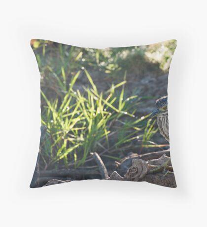 Nankeen Night Heron Throw Pillow
