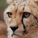 Cheetah Face iphone cover by Brad Francis