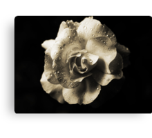 Rain Drops On A Rose -Sepia- Canvas Print
