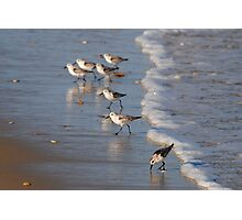 Piping Plovers Photographic Print