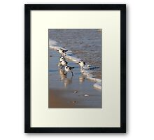 Piping Plovers 2 Framed Print