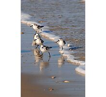 Piping Plovers 2 Photographic Print