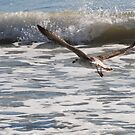 In Flight by Robin Black