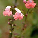 Flowers 2 by Robin Black