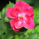 Flower by Robin Black