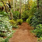 Secret Path by Robin Black