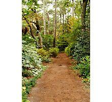 Secret Path Photographic Print