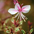 Flowers 3 by Robin Black
