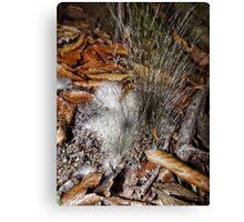 Furry Fungi Canvas Print
