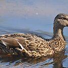 Duck, Duck by Robin Lee