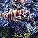 Leo the Lion Fish by vigor