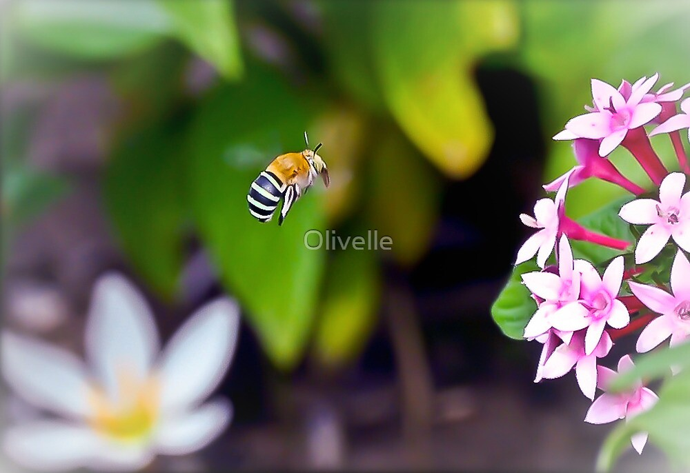 Bumble Bee by Olivelle