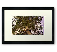 Aspen Base Framed Print