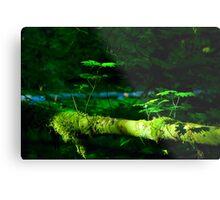 Northwest forest Metal Print