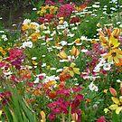 Spring Flowers by joycee