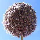 Giant Onion Flower by Esther's Art and Photography